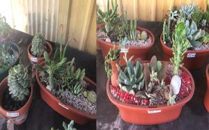 Plant Specials